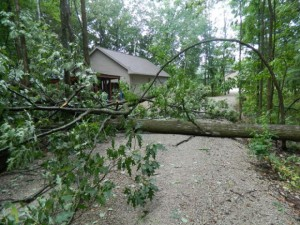 166732-oak-tree-blown-down-in-pulaski-833f4